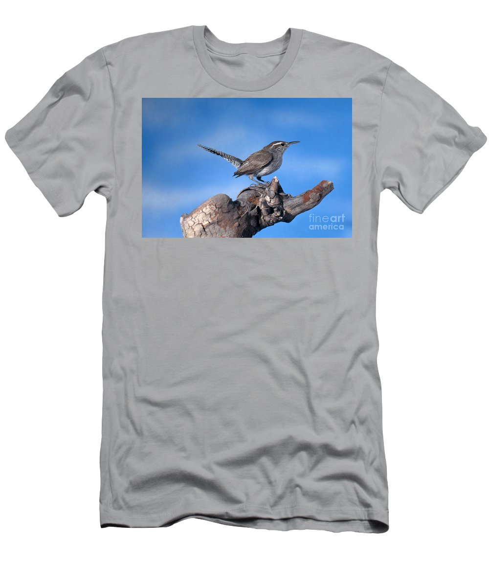 Bird Men's T-Shirt (Athletic Fit) featuring the photograph Bewicks Wren by Anthony Mercieca