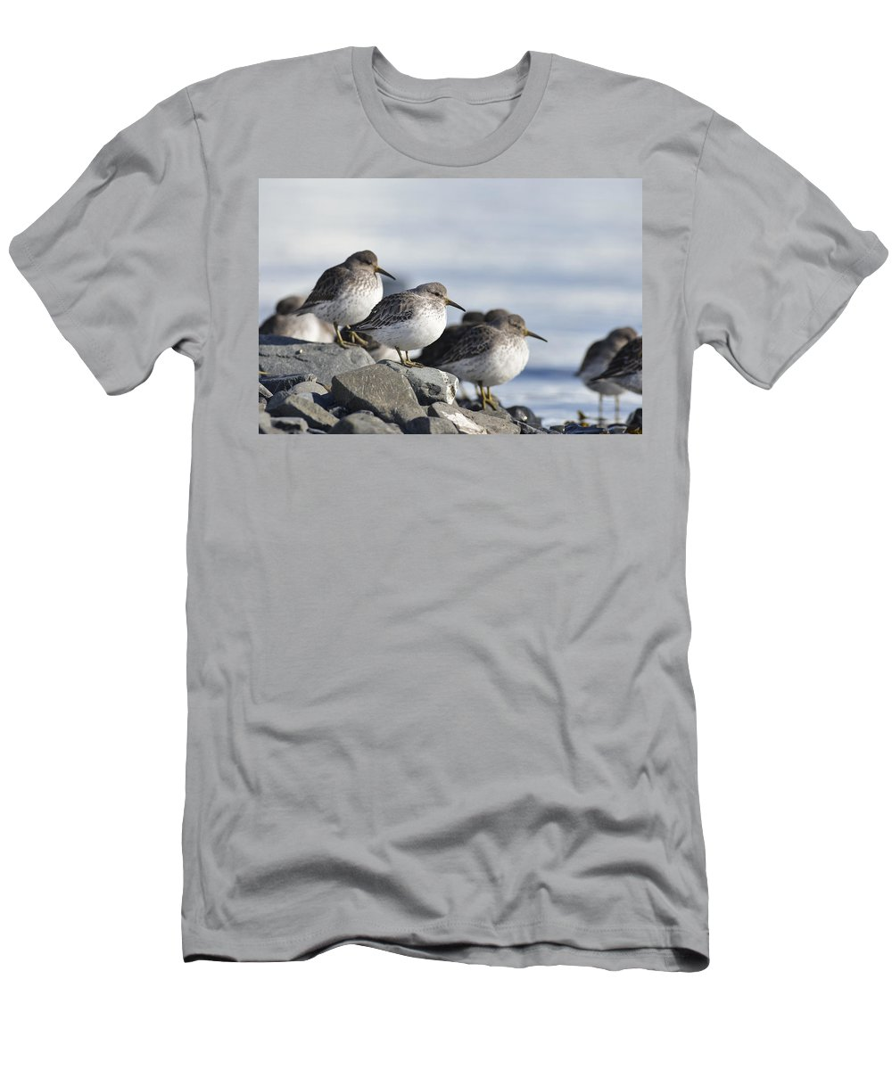 Sandpiper Men's T-Shirt (Athletic Fit) featuring the photograph Birds Of A Feather by Ted Raynor