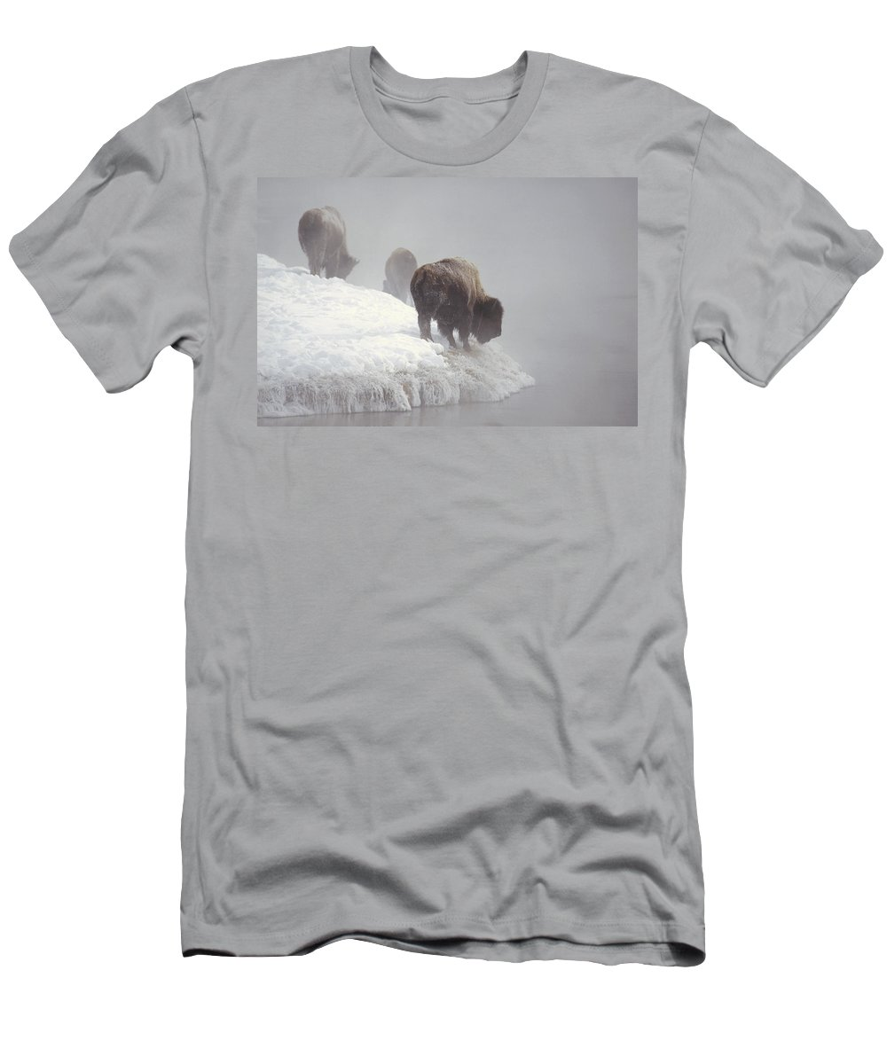 Feb0514 T-Shirt featuring the photograph Bison Along Snowy Riverbank Yellowstone by Konrad Wothe