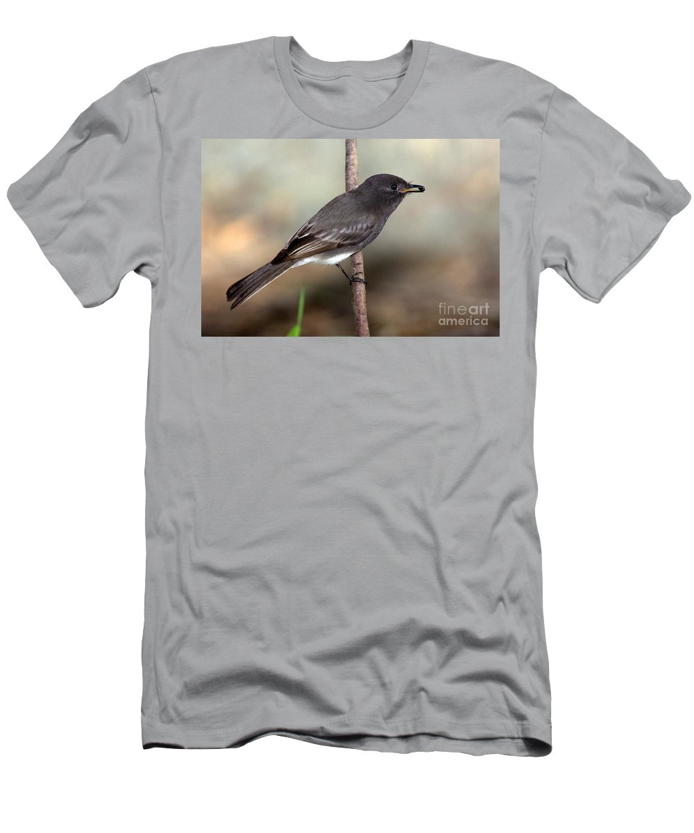 Black Phoebe Men's T-Shirt (Athletic Fit) featuring the photograph Black Phoebe by Anthony Mercieca