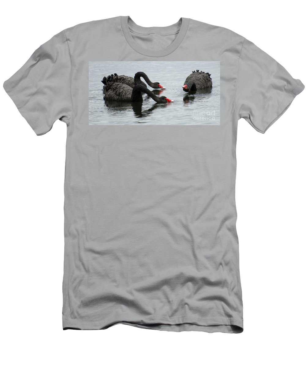 Black Swans Men's T-Shirt (Athletic Fit) featuring the photograph Black Swans Australia by Bob Christopher