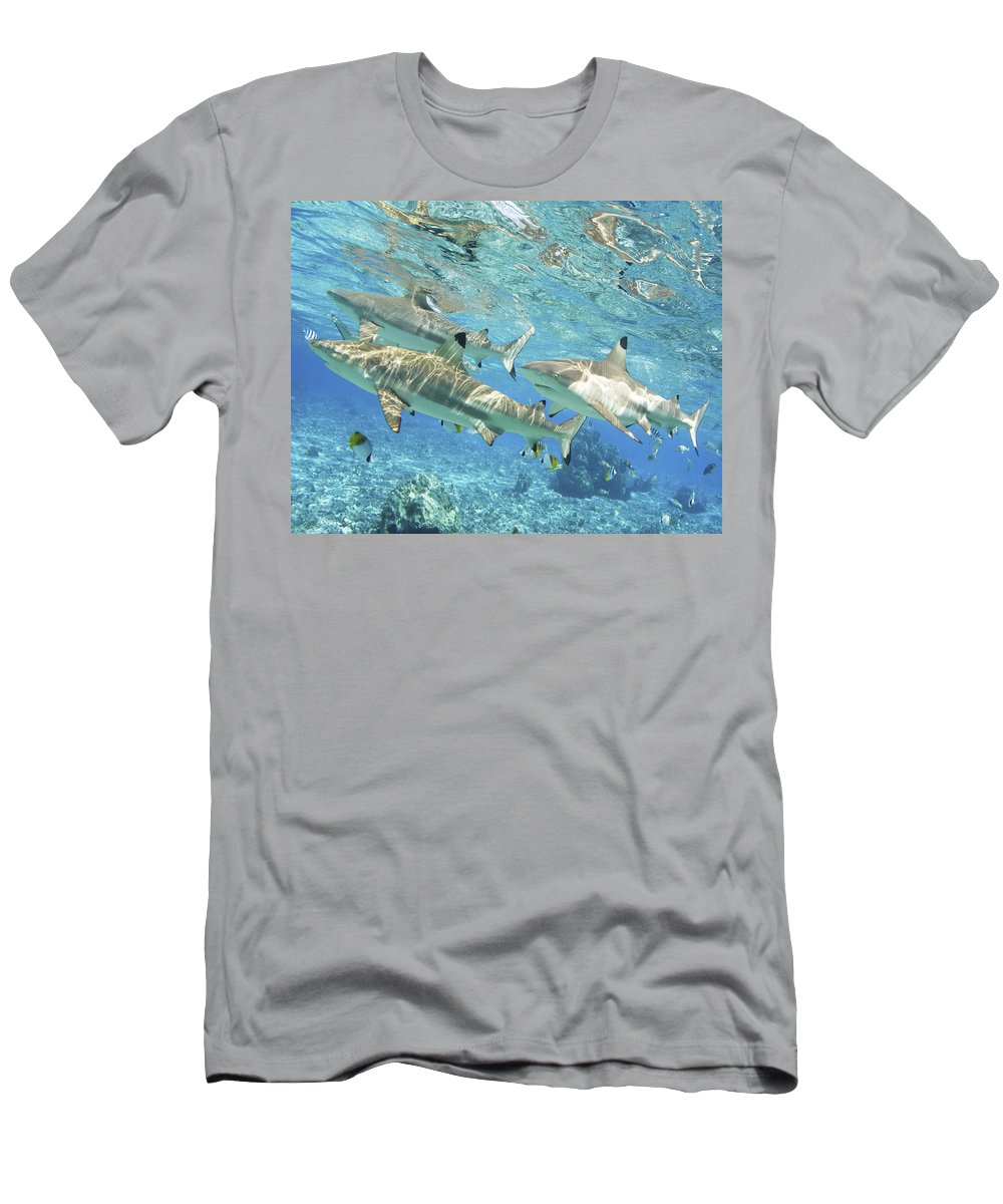 Adrenaline Men's T-Shirt (Athletic Fit) featuring the photograph Blacktip Reef Shark by M Swiet Productions