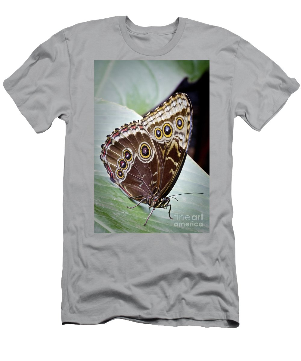 Blue Morpho Butterfly Men's T-Shirt (Athletic Fit) featuring the photograph Blue Morpho Butterfly Costa Rica by Carrie Cranwill