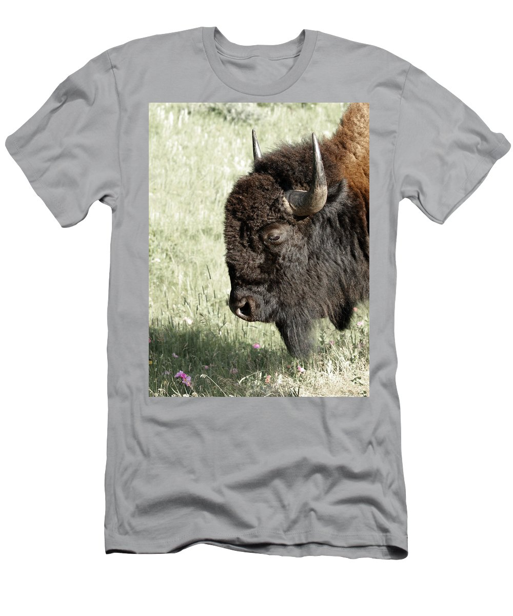 Buffalo Men's T-Shirt (Athletic Fit) featuring the photograph Buffalo by Ernie Echols