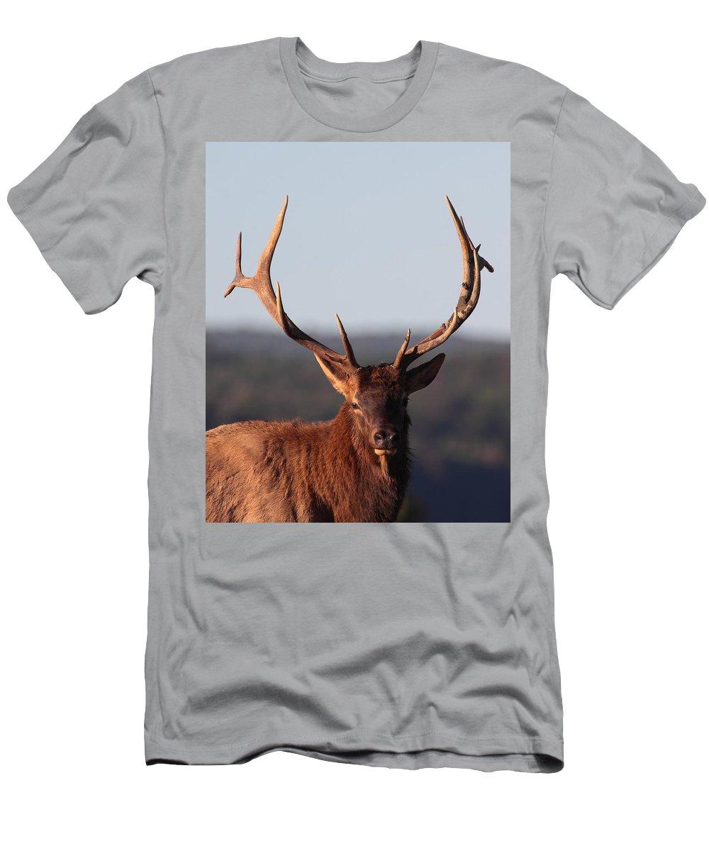 Elk Men's T-Shirt (Athletic Fit) featuring the photograph Bull Elk Portrait by Bruce J Robinson