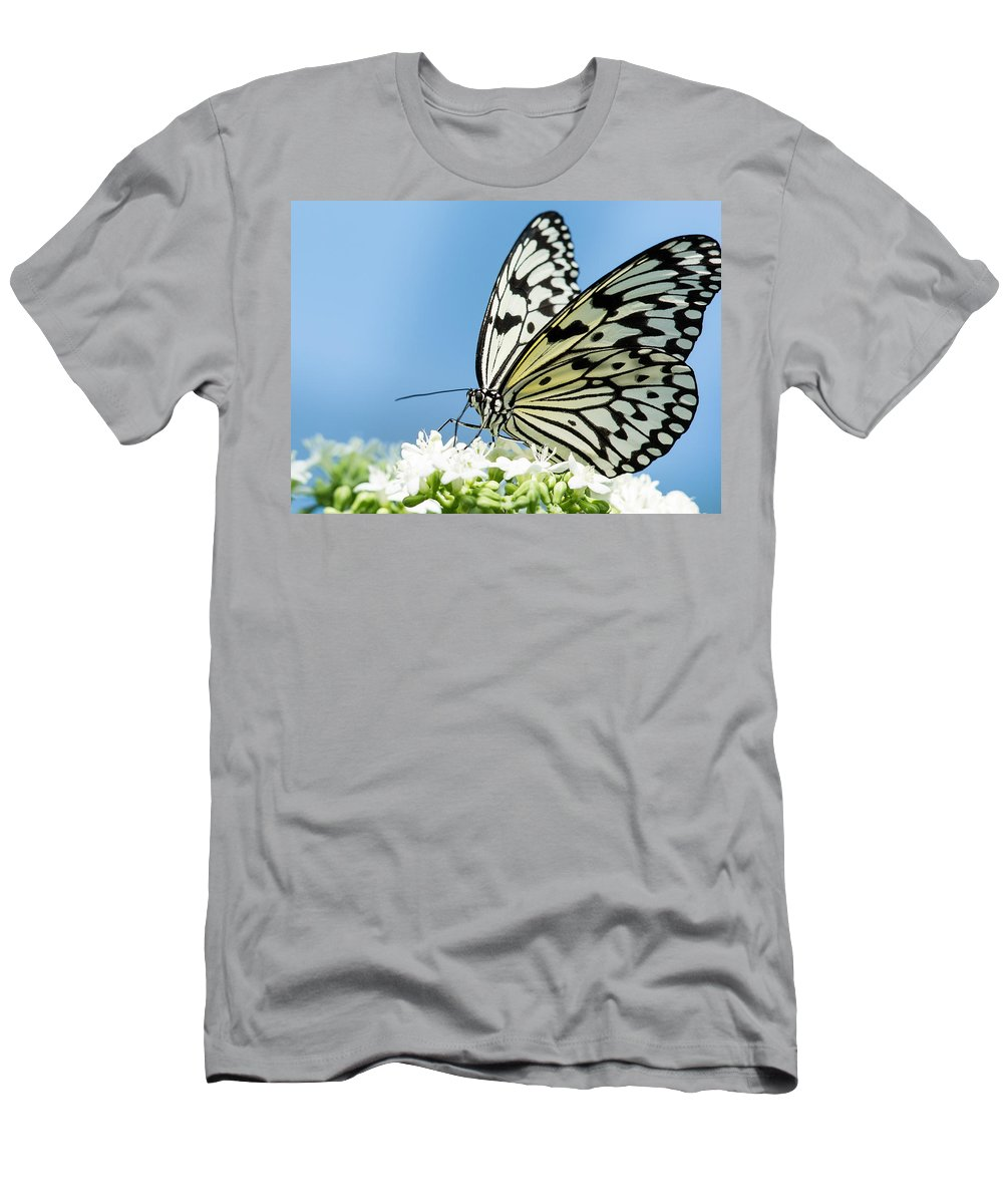 Albert Ginter Botantical Gardens Men's T-Shirt (Athletic Fit) featuring the photograph Butterfly On Blue by Cindy Archbell