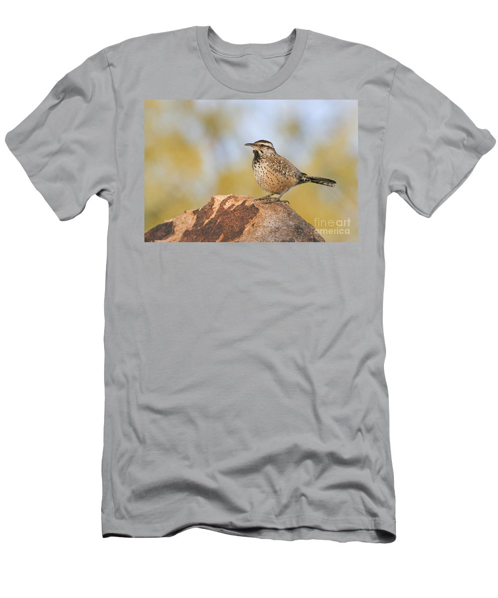Cactus Wren Men's T-Shirt (Athletic Fit) featuring the photograph Cactus Wren On Rock by Bryan Keil