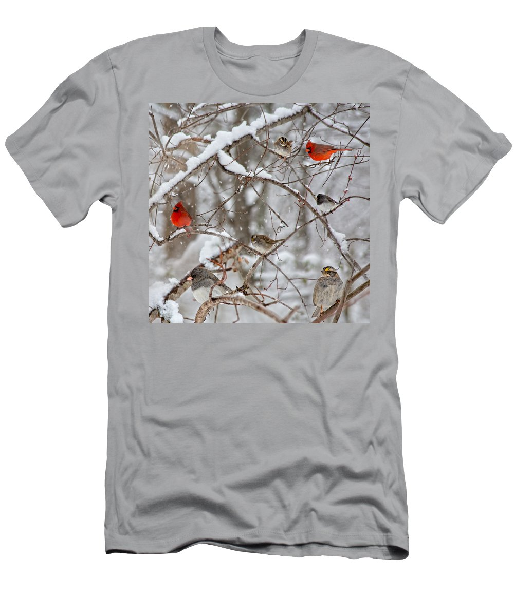 Red Men's T-Shirt (Athletic Fit) featuring the photograph Cardinal Meeting In The Snow by Betsy Knapp