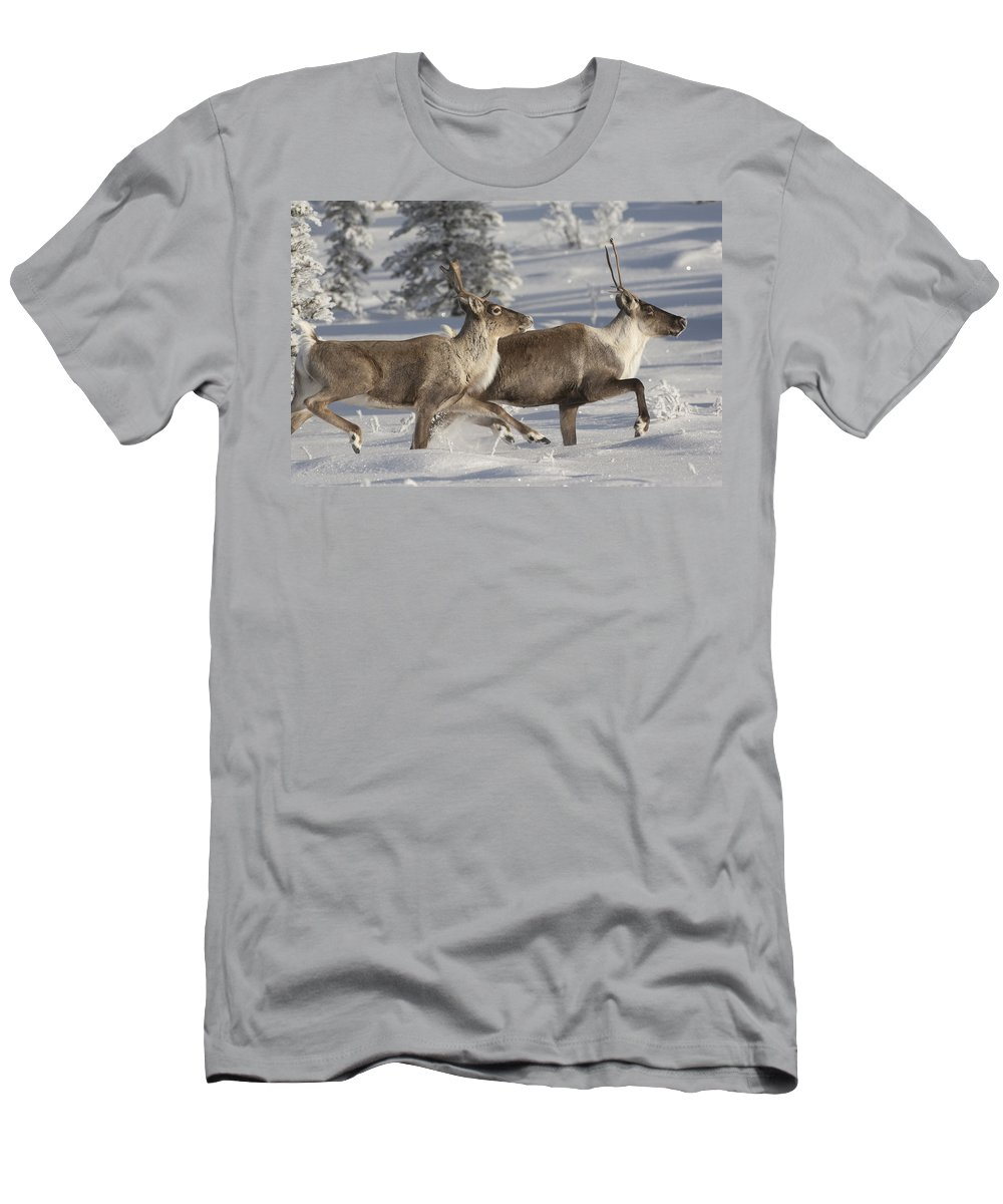 Feb0514 T-Shirt featuring the photograph Caribou Running In Snow Alaska by Michael Quinton