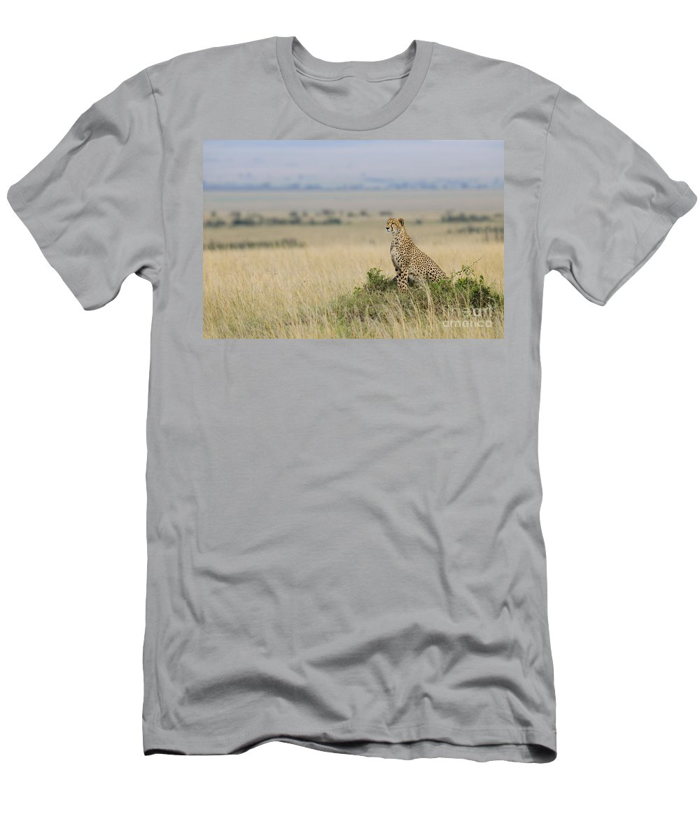 Acinonyx Jubatus Men's T-Shirt (Athletic Fit) featuring the photograph Cheetah Perched On A Mound by John Shaw