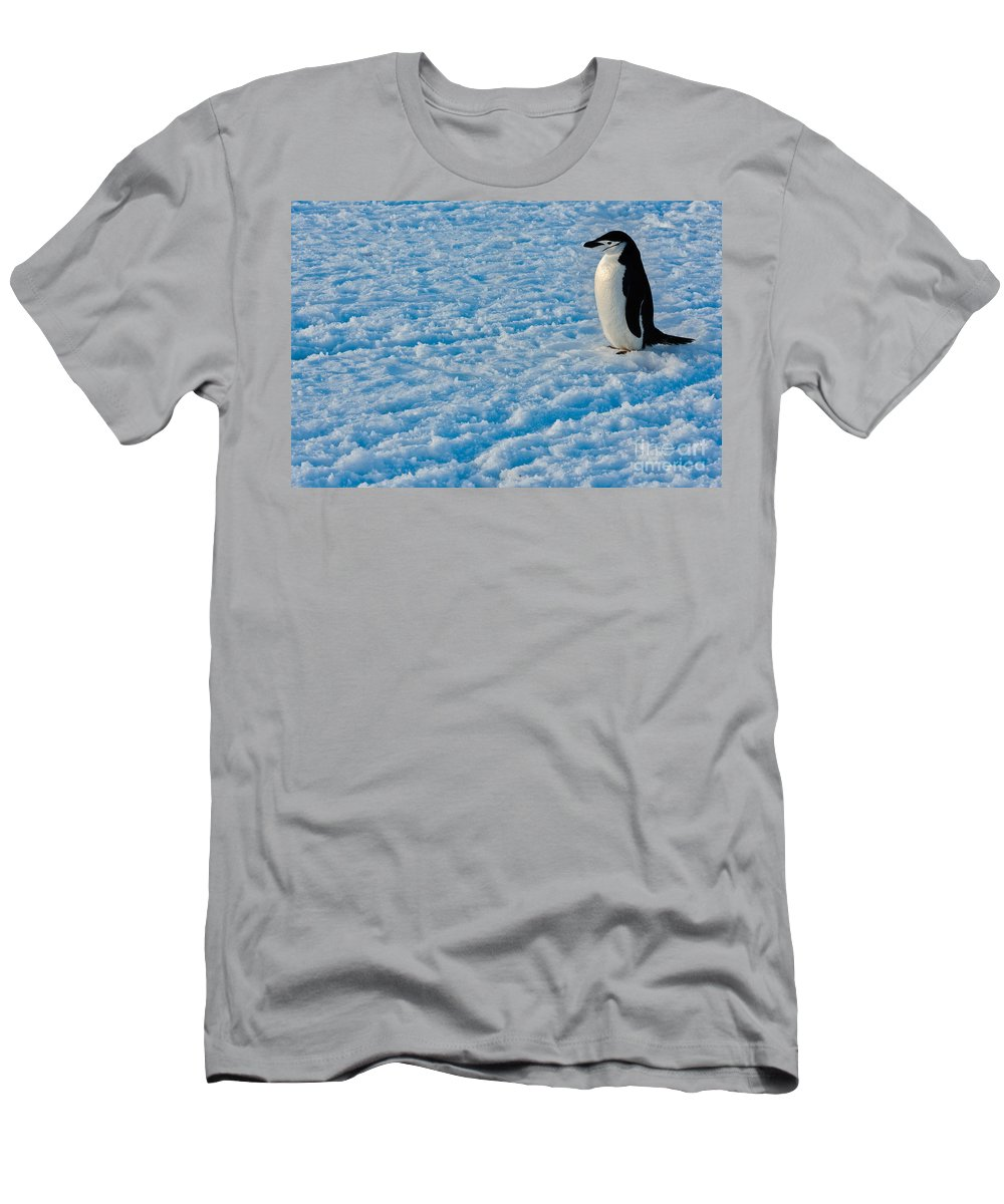 Antarctica Men's T-Shirt (Athletic Fit) featuring the photograph Chinstrap Penguin by John Shaw