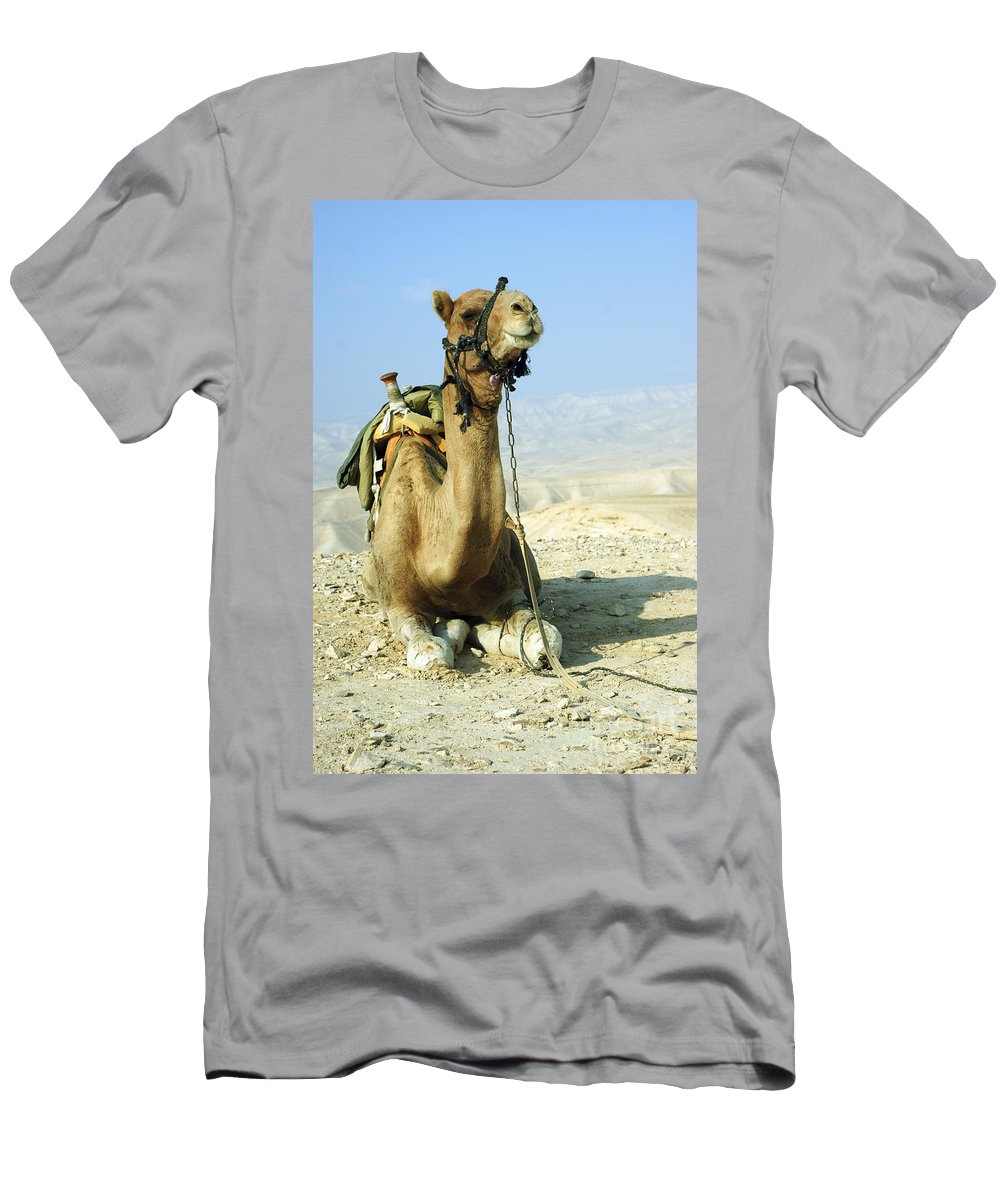 Camel Men's T-Shirt (Athletic Fit) featuring the photograph Closeup Of A Camel by Shay Fogelman