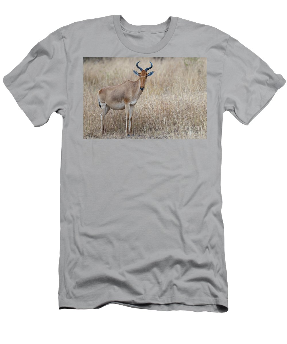 African Fauna Men's T-Shirt (Athletic Fit) featuring the photograph Cokes Hartebeest by John Shaw