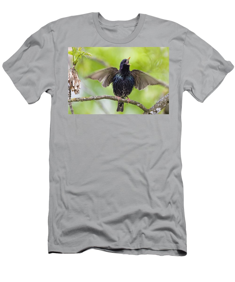 Feb0514 Men's T-Shirt (Athletic Fit) featuring the photograph Common Starling Singing Bavaria by Konrad Wothe