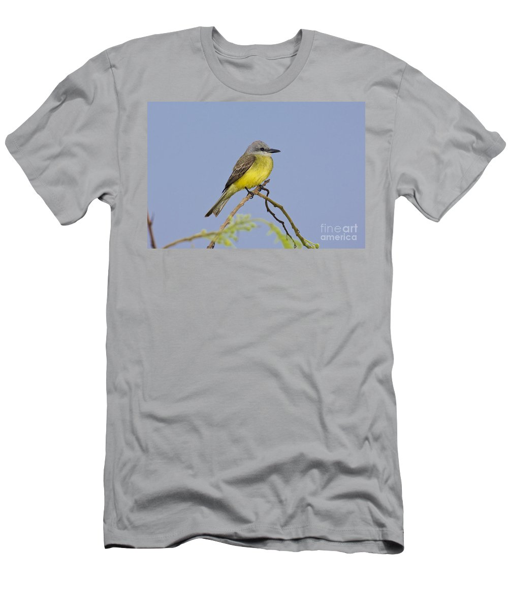 Couche's Kingbird Men's T-Shirt (Athletic Fit) featuring the photograph Couchs Kingbird by Anthony Mercieca