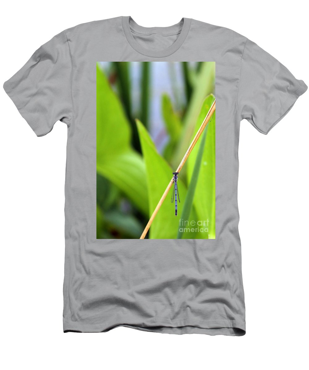 Damselfly Men's T-Shirt (Athletic Fit) featuring the photograph Damselfly Female by Renee Croushore