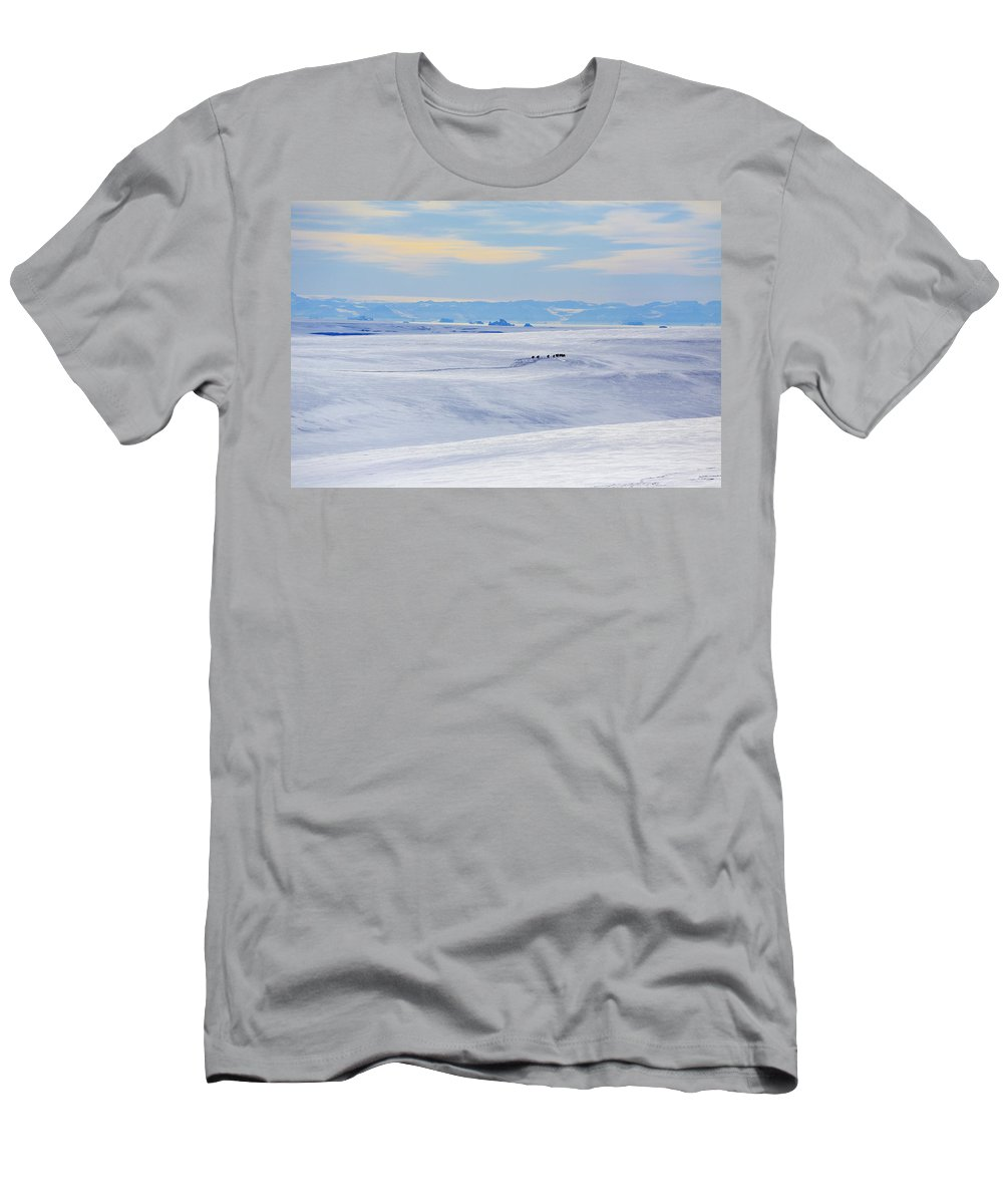 Winter Men's T-Shirt (Athletic Fit) featuring the photograph Distant View Of A Musk Ox And Snow by Johnathan Ampersand Esper