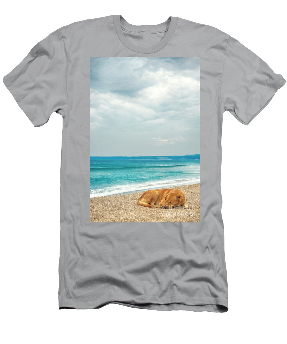 Beach Men's T-Shirt (Athletic Fit) featuring the photograph Dog Sleeping On Beach by Yew Kwang