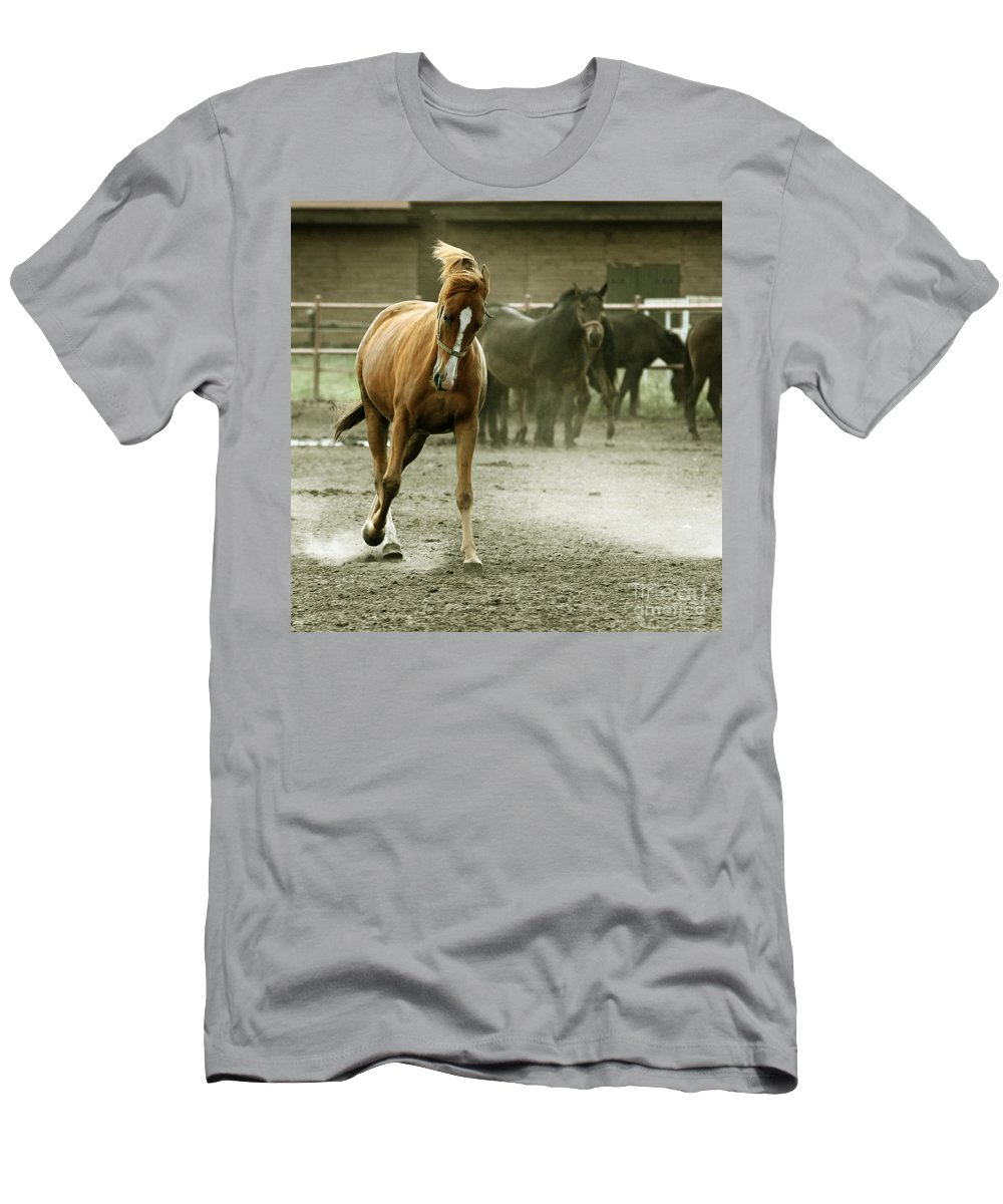 Paddock Men's T-Shirt (Athletic Fit) featuring the photograph Dusty Paddock by Angel Ciesniarska