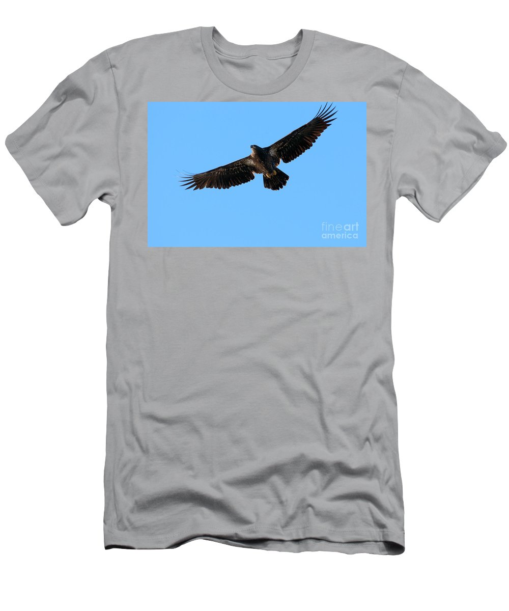 Bald Eagle Men's T-Shirt (Athletic Fit) featuring the photograph Eagle Wings by Sharon Talson