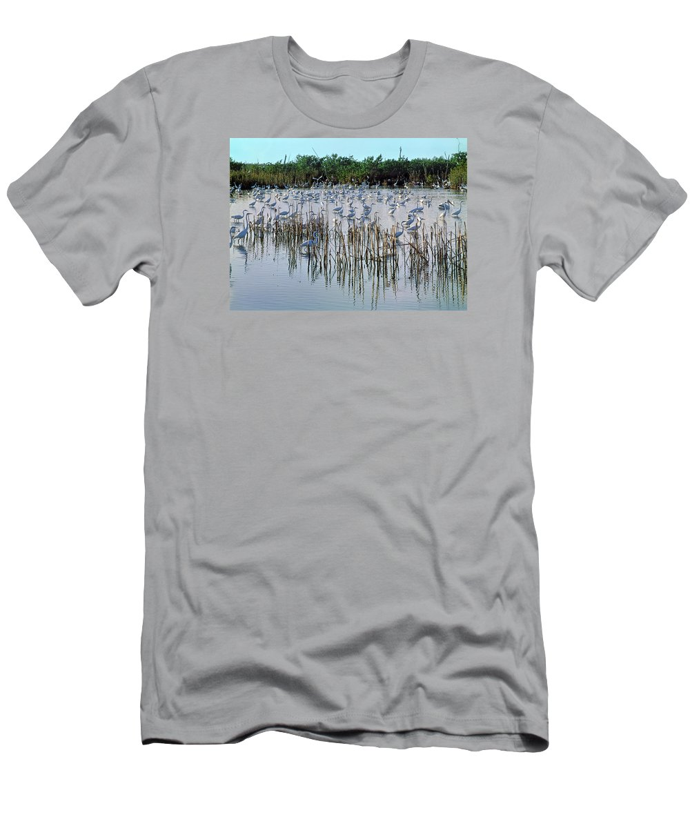 Great Egrets Men's T-Shirt (Athletic Fit) featuring the photograph 149838-egrets Feeding, Everglades Nat Park by Ed Cooper Photography