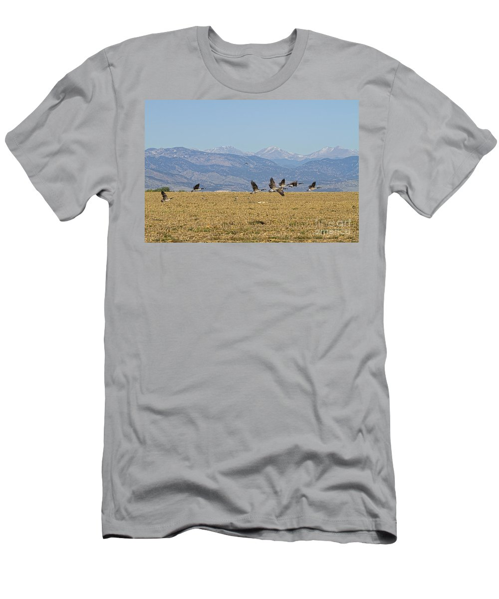 Cackling Goose Men's T-Shirt (Athletic Fit) featuring the photograph Flying Canadian Geese Colorado Rocky Mountains 1 by James BO Insogna