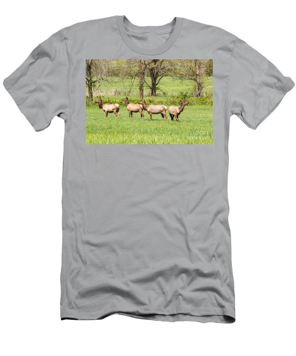 Animals Men's T-Shirt (Athletic Fit) featuring the photograph Four Elk by Terri Morris