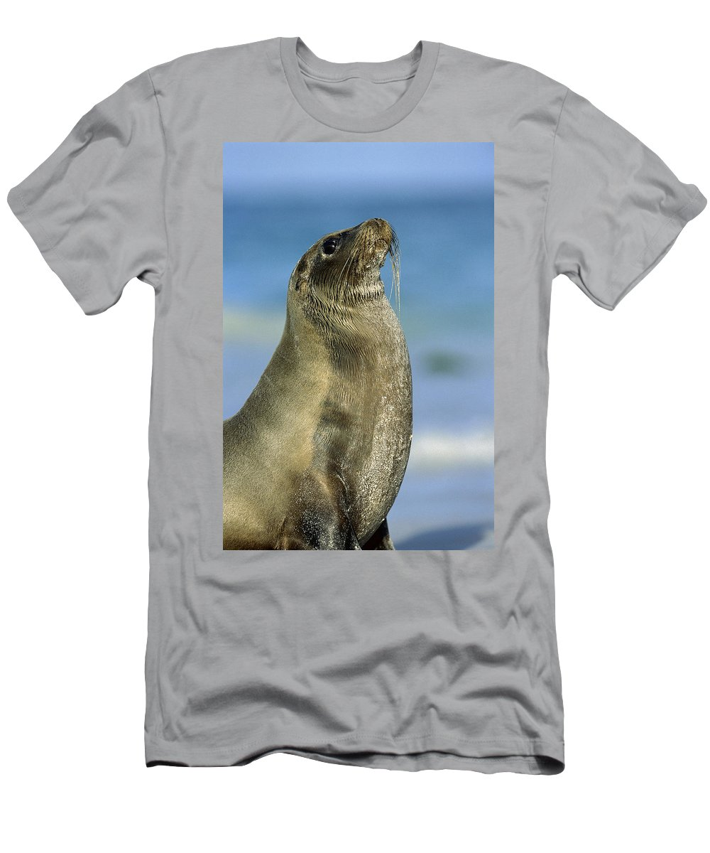 Feb0514 Men's T-Shirt (Athletic Fit) featuring the photograph Galapagos Sea Lion Coral Beach by Tui De Roy