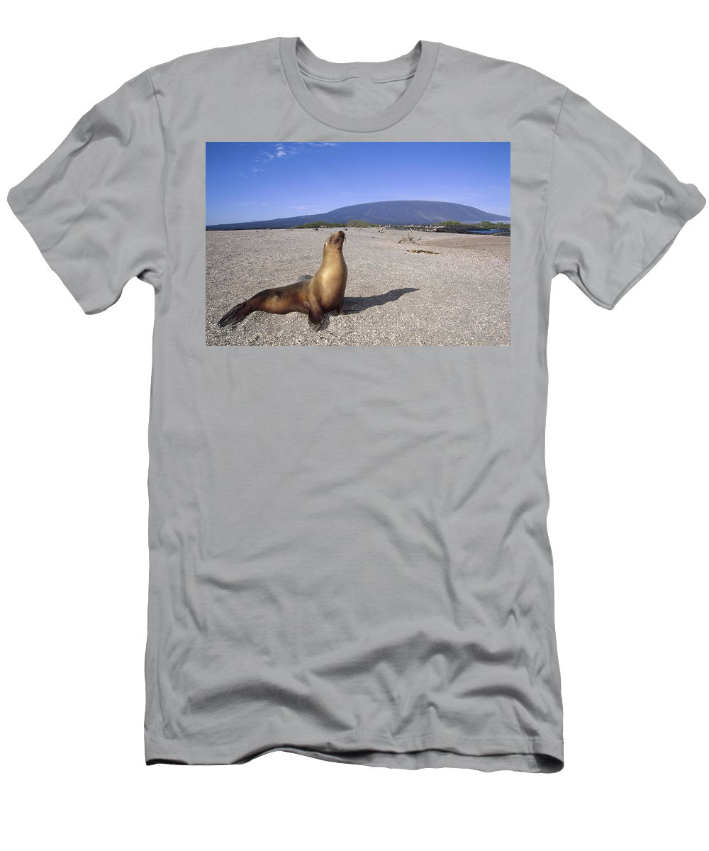 Feb0514 Men's T-Shirt (Athletic Fit) featuring the photograph Galapagos Sea Lion Juvenile On Beach by Tui De Roy
