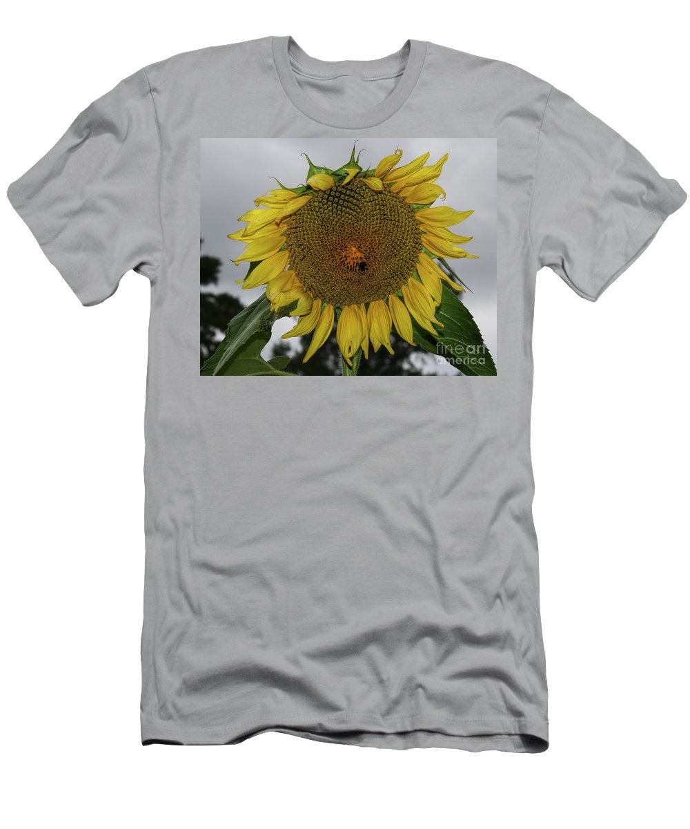 Giant Sunflower Men's T-Shirt (Athletic Fit) featuring the photograph Giant Sunflower by Barbara Bowen