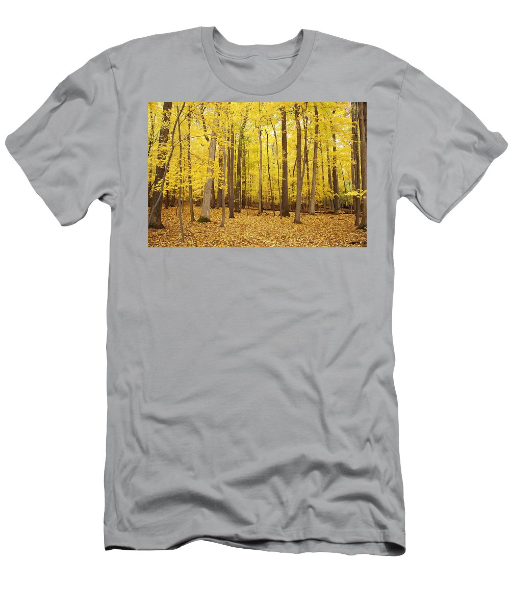Autumn Men's T-Shirt (Athletic Fit) featuring the photograph Golden Woods by Aimee L Maher ALM GALLERY