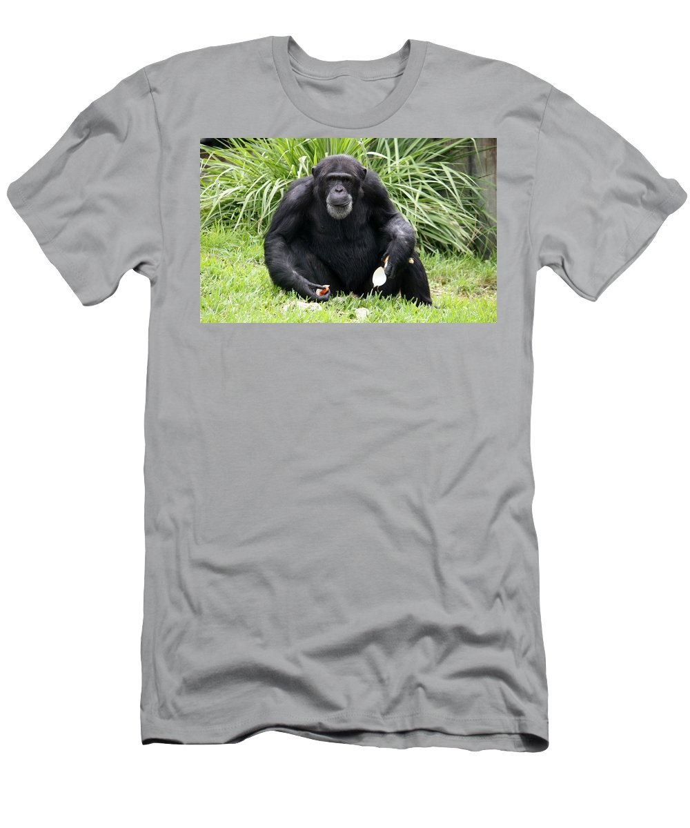 Chimpanze Men's T-Shirt (Athletic Fit) featuring the photograph Grey Beard by David Nicholls