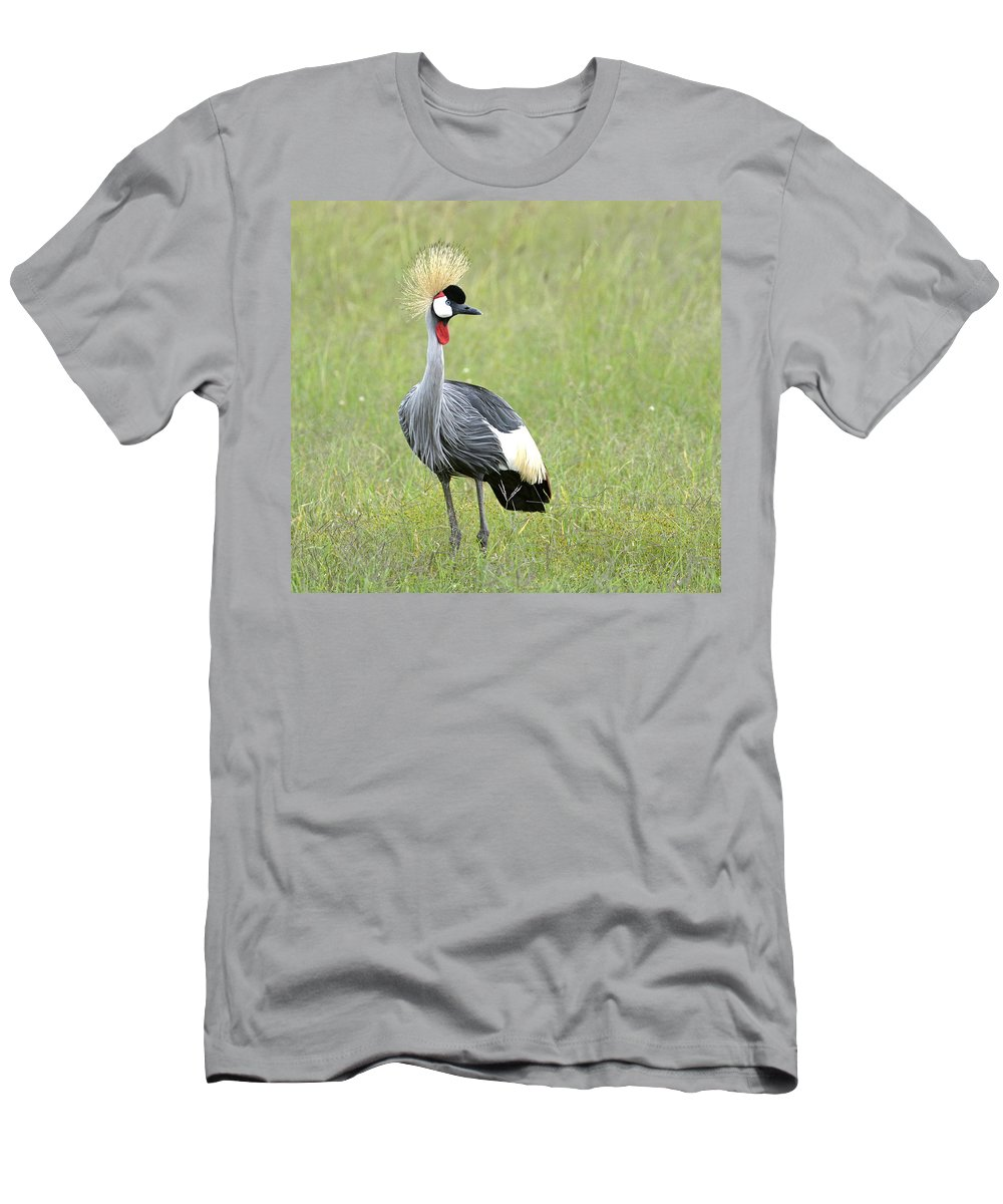 Nature Men's T-Shirt (Athletic Fit) featuring the photograph Grey Crowned Crane by Claudio Bacinello