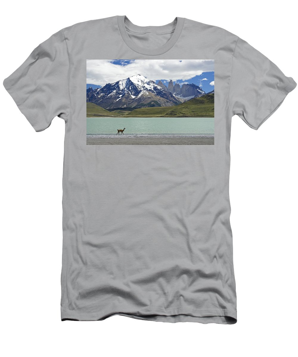 Chile Men's T-Shirt (Athletic Fit) featuring the photograph Guanaco At Laguna Amarga by Michele Burgess