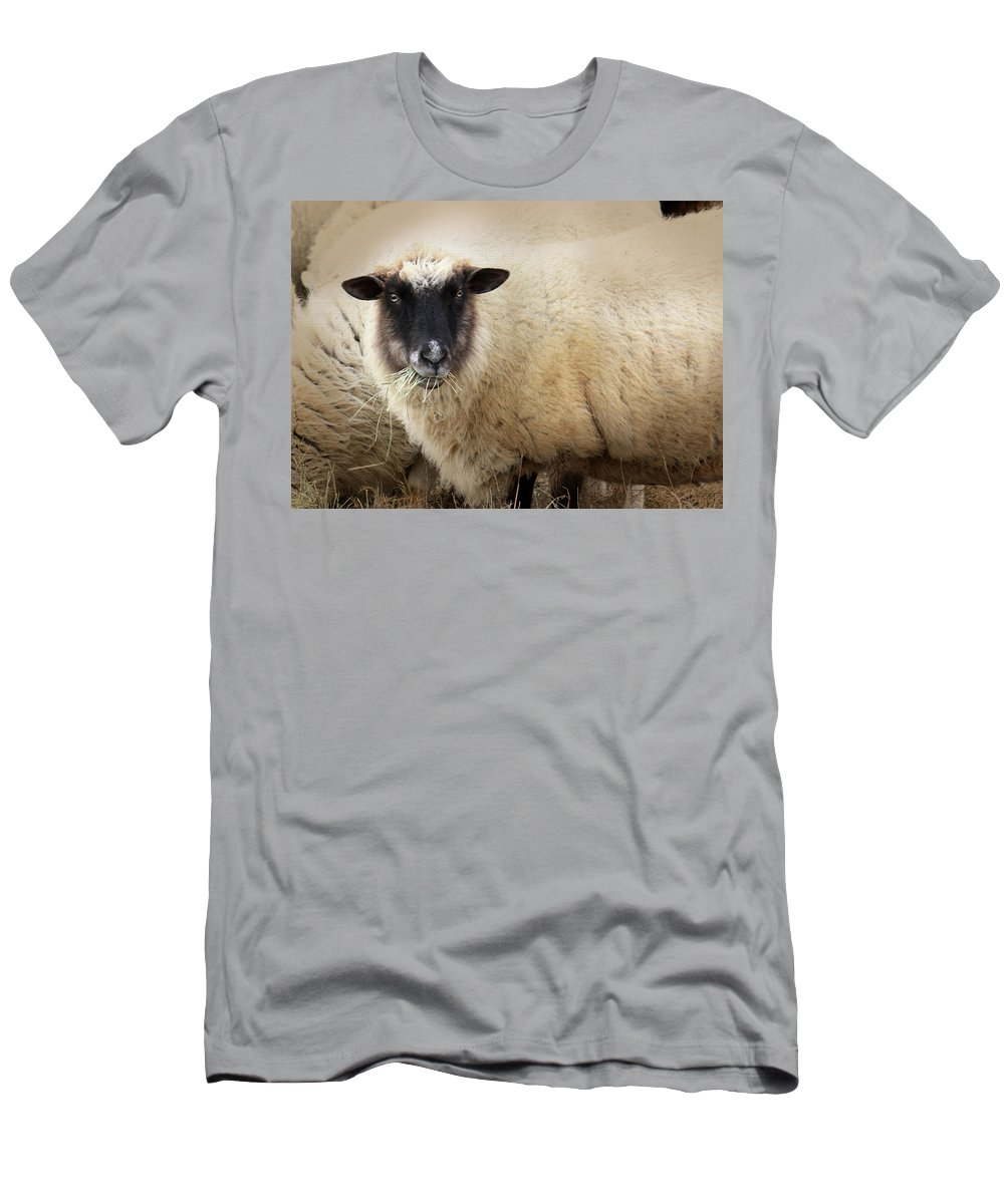 Sheep Men's T-Shirt (Athletic Fit) featuring the photograph Have You Any Wool? by Lori Deiter