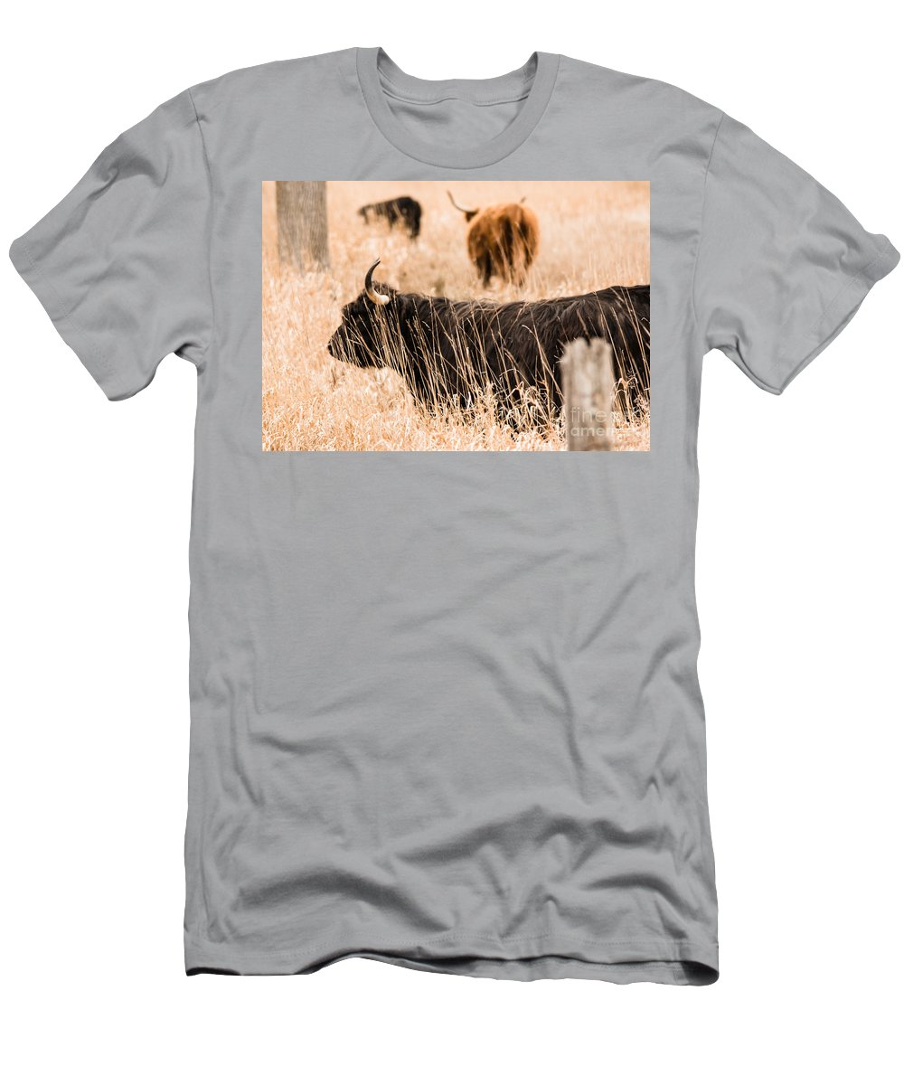 Men's T-Shirt (Athletic Fit) featuring the photograph Highland Cattle by Cheryl Baxter