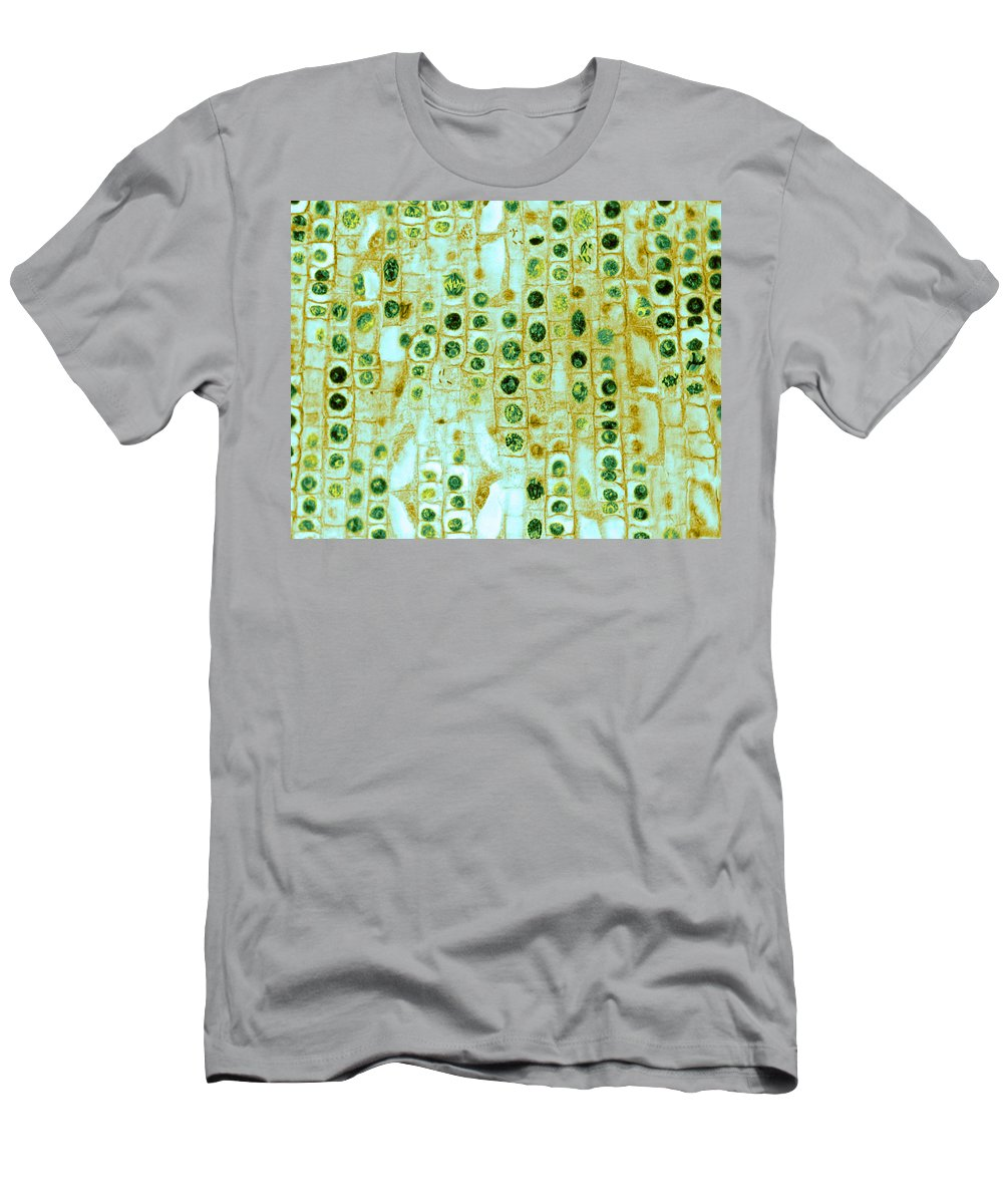 Science Men's T-Shirt (Athletic Fit) featuring the photograph Hyacinth Root Tip Cells by Omikron
