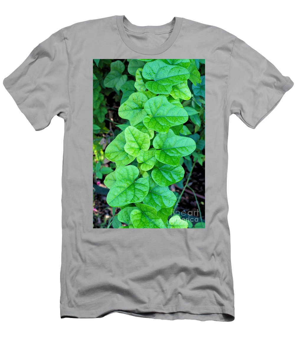 Field Men's T-Shirt (Athletic Fit) featuring the photograph In The Field by Gary Richards