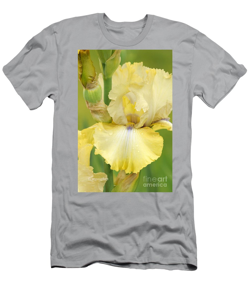 Bearded Iris County Cork Men's T-Shirt (Athletic Fit) featuring the photograph Iris County Cork by Regina Geoghan