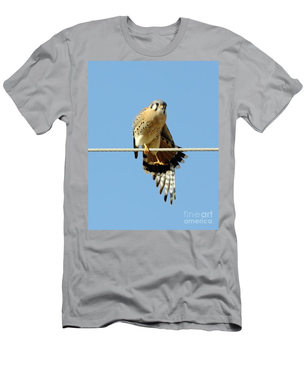 Animal Men's T-Shirt (Athletic Fit) featuring the photograph Kestrel On The Tightwire by Robert Frederick