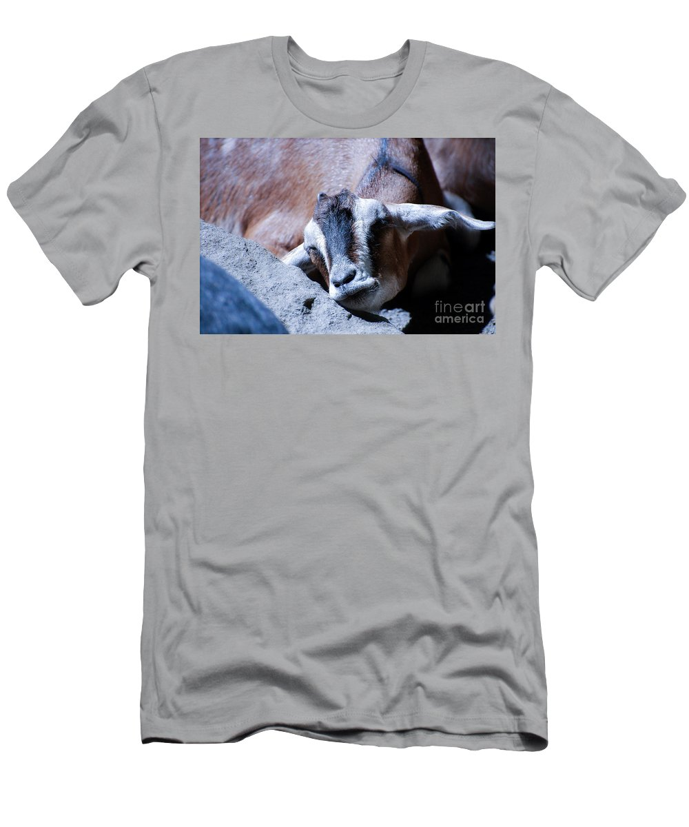 Goat Men's T-Shirt (Athletic Fit) featuring the photograph Kid Napping by Rich Priest