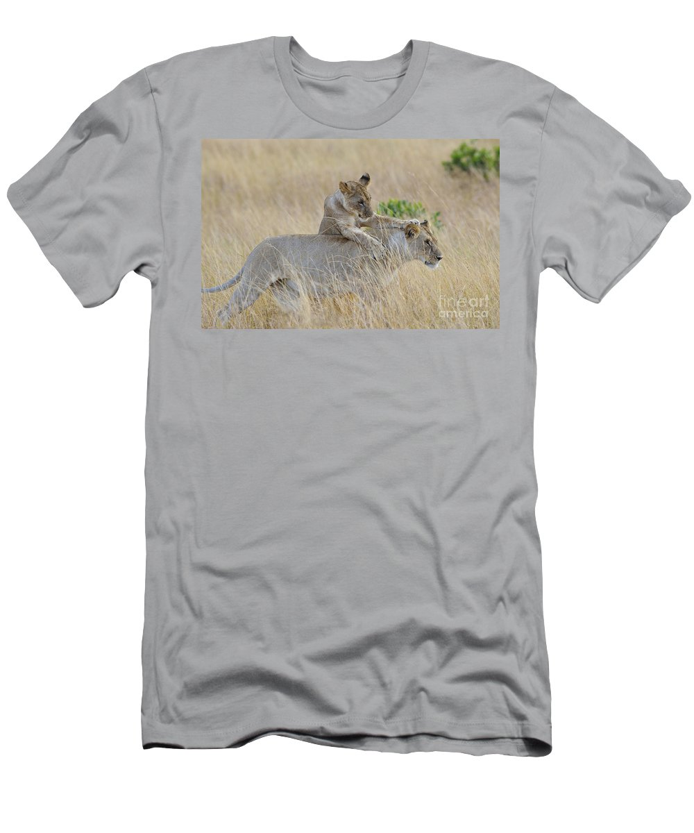 Africa Men's T-Shirt (Athletic Fit) featuring the photograph Lion Cub Playing With Female Lion by John Shaw