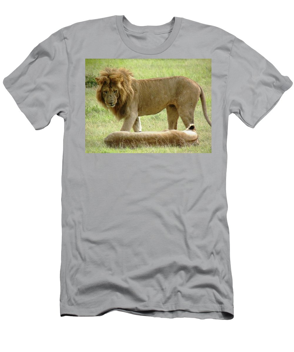 Lions Men's T-Shirt (Athletic Fit) featuring the photograph Lions On The Masai Mara by Tony Murtagh