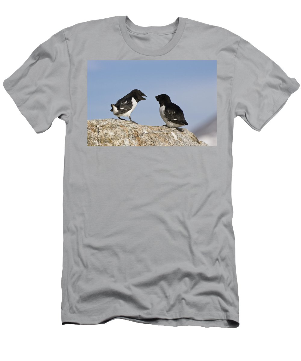 Feb0514 Men's T-Shirt (Athletic Fit) featuring the photograph Little Auk Pair Spitsbergen Norway by Konrad Wothe