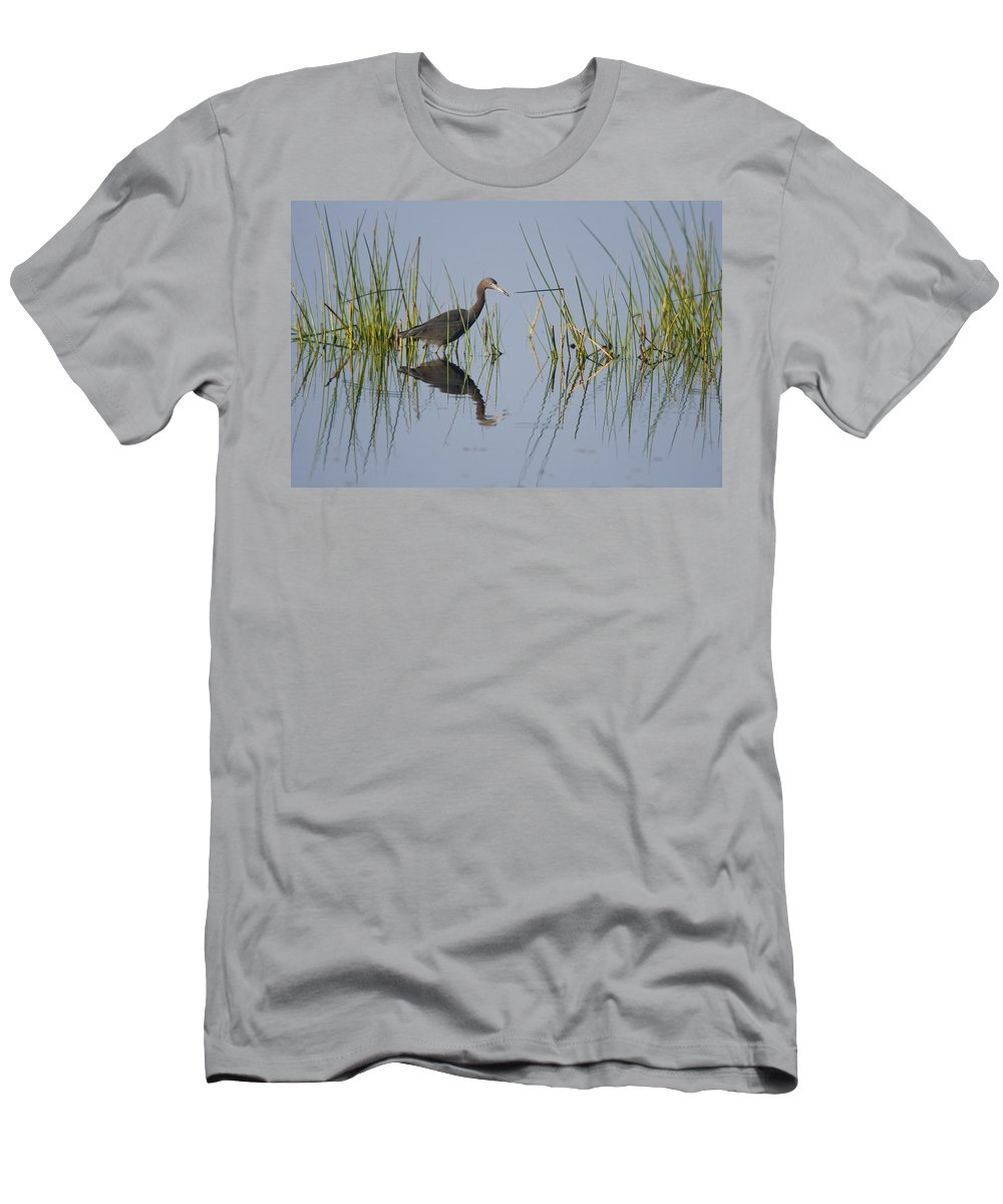 Feb0514 Men's T-Shirt (Athletic Fit) featuring the photograph Little Blue Heron Wading Texas by Tom Vezo
