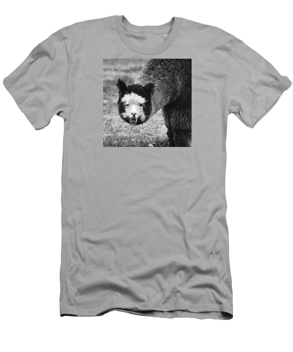 Animals Men's T-Shirt (Athletic Fit) featuring the photograph Llama by Yulia Kazansky