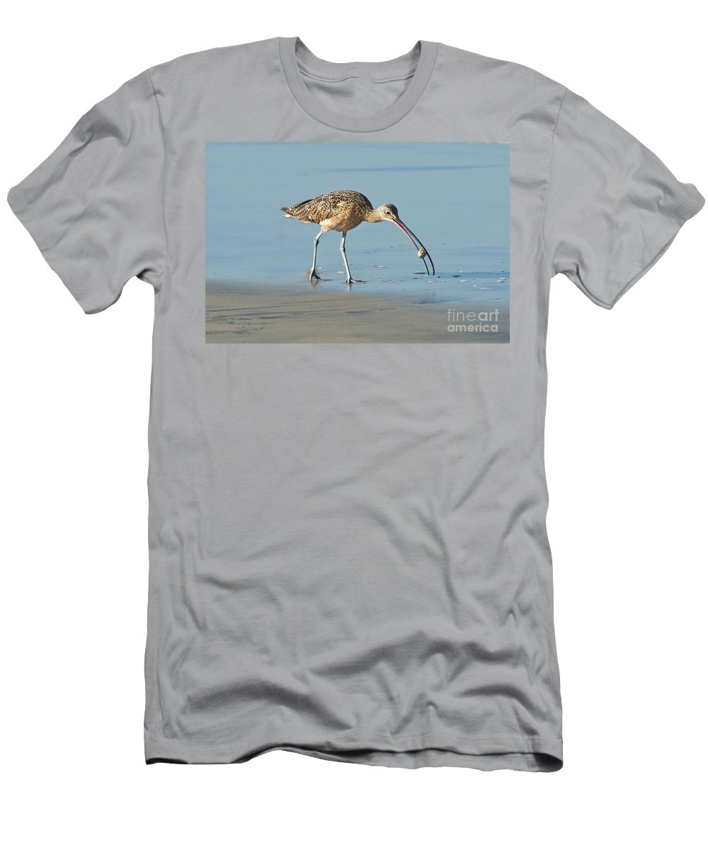 North American Men's T-Shirt (Athletic Fit) featuring the photograph Long-billed Curlew Catching Crab by Anthony Mercieca