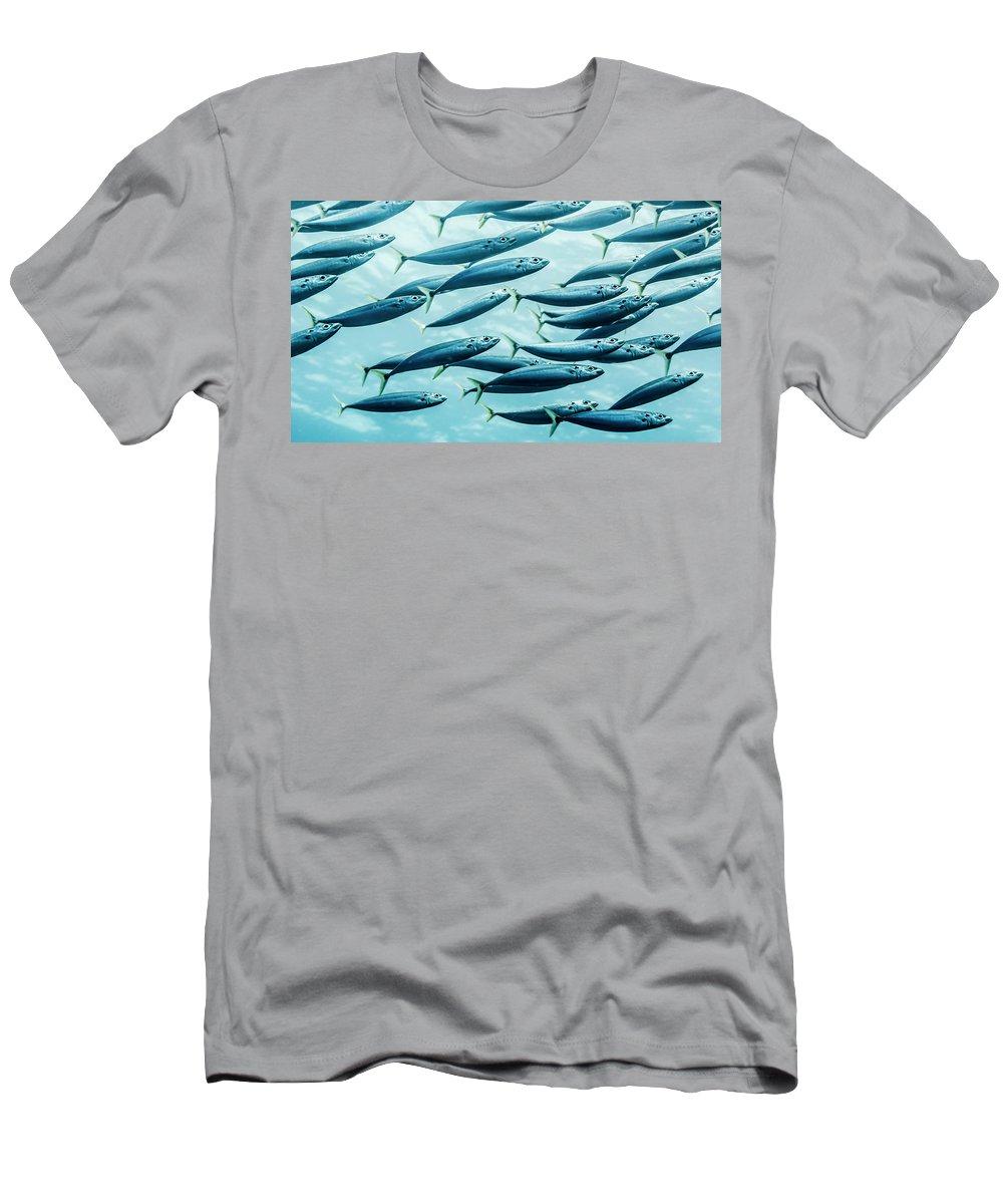Decapterus Macarellus T-Shirt featuring the photograph Mackerel Scad Decapterus Macarellus by Thomas Kline