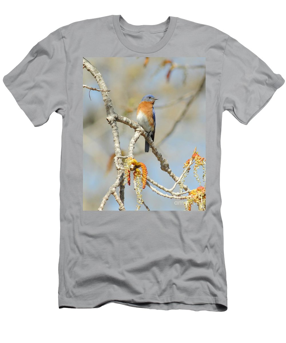 Animal Men's T-Shirt (Athletic Fit) featuring the photograph Male Bluebird In Budding Tree by Robert Frederick