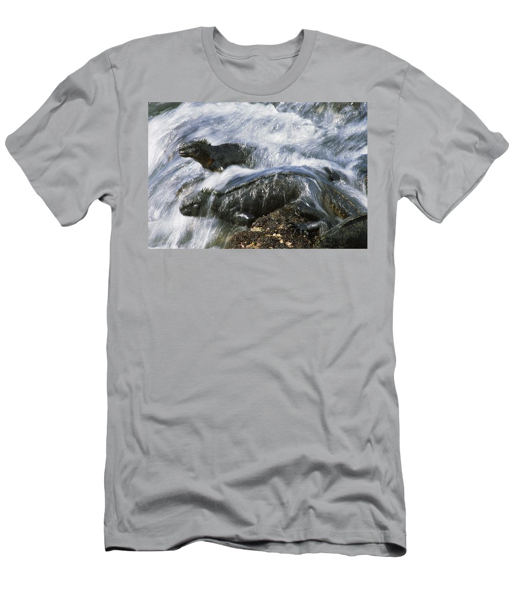 Feb0514 Men's T-Shirt (Athletic Fit) featuring the photograph Marine Iguana Pair In Surf Galapagos by Tui De Roy
